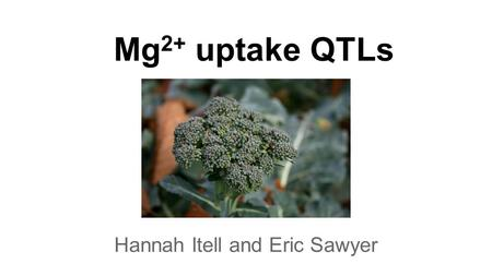 Mg 2+ uptake QTLs Hannah Itell and Eric Sawyer. Biological roles for Mg 2+ ●chlorophyll ●common cofactor (RNA pol, kinases, ATPases, …) ●most Mg 2+ is.