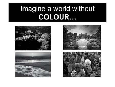 Imagine a world without COLOUR…. Welcome back! COLOUR is remarkable beauty often taken for granted.