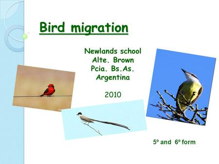 Bird migration Newlands school Alte. Brown Pcia. Bs.As. Argentina 2010 5º and 6º form.