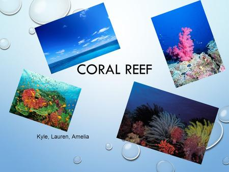 CORAL REEF Kyle, Lauren, Amelia. WHERE IS ECOSYSTEM LOCATED? LOCATED IN THE TROPICS [WARM SEAS] NORTH AND SOUTH OF EQUATOR TROPICAL OCEANS FOUND ALONG.