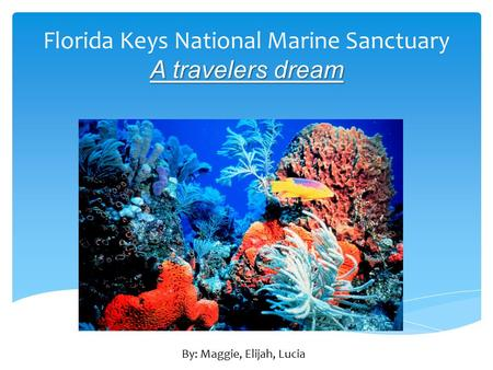 Florida Keys National Marine Sanctuary A travelers dream