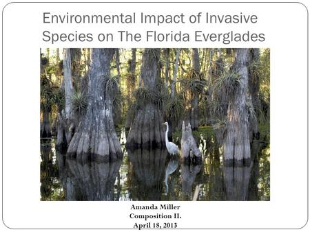 Environmental Impact of Invasive Species on The Florida Everglades Amanda Miller Composition II. April 18, 2013.
