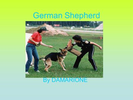 German Shepherd By DAMARIONE. Description A German Shepherd is a big dog. The Shepherd can weigh about 150 pounds. It is about 5.4 inches tall when they.