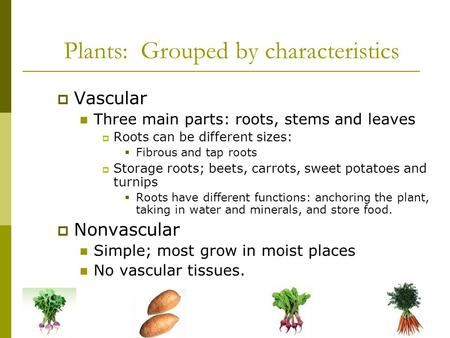 Plants: Grouped by characteristics