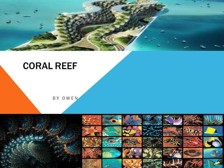 CORAL REEF BY OWEN