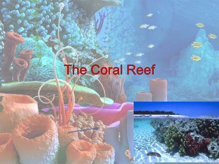 The Coral Reef The Coral Reef is Coral reefs are warm, clear, shallow ocean habitats that are rich in life.