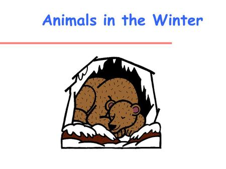 Animals in the Winter What do animals do during the winter? Think Talk to a partner Share with the class.