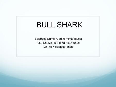 BULL SHARK Scientific Name: Carcharhinus leucas Also Known as the Zambezi shark Or the Nicaragua shark.