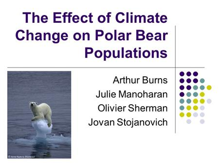 The Effect of Climate Change on Polar Bear Populations Arthur Burns Julie Manoharan Olivier Sherman Jovan Stojanovich.