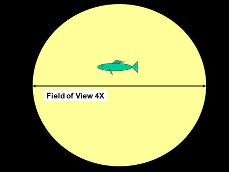 Field of View 4X. Field of View 10X Field of View 40X.