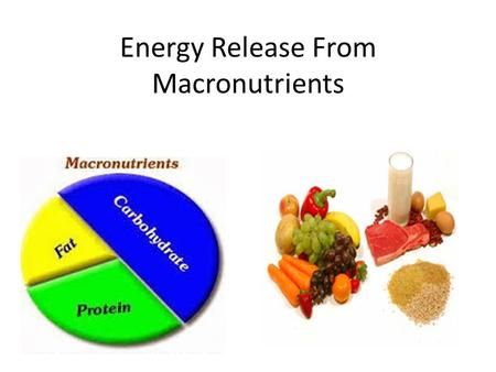 Energy Release From Macronutrients The Concept of Energy Balance.
