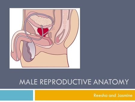 MALE REPRODUCTIVE ANATOMY Reesha and Jasmine. 1. Label the following diagram.