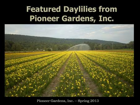 Featured Daylilies from Pioneer Gardens, Inc. Pioneer Gardens, Inc. – Spring 2013.
