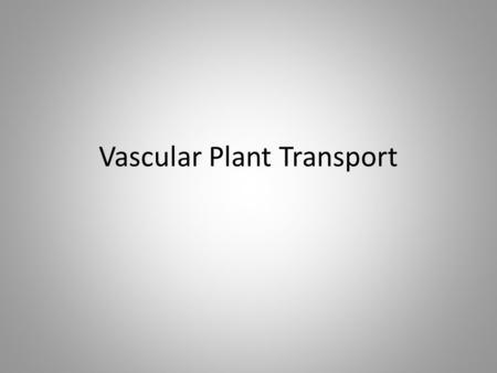 Vascular Plant Transport. Plant Transport Root need sugar Leaf make sugar Leaf need water Root have water Water go up Sugar go down Root and Leaf share.