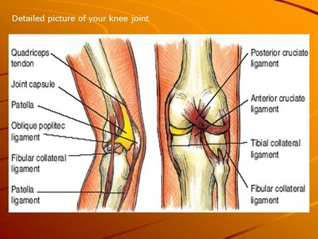 Detailed picture of your knee joint. Collateral ligaments The lateral collateral ligament strengthens the knee joint on the outer side of the knee.
