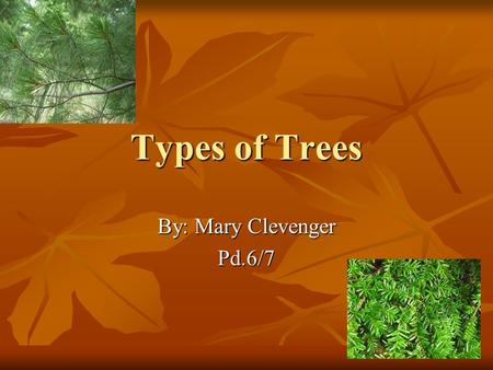 Types of Trees By: Mary Clevenger Pd.6/7. Table of Contexts Beech22Beech22 Black Cherry 7Black Cherry 7 Black Locust 16Black Locust 16 Black Spruce 1Black.