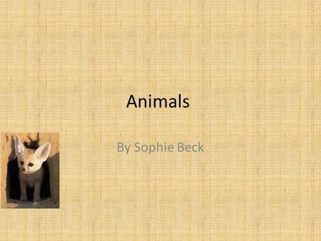 Animals By Sophie Beck. cats Cats were very important animals in Ancient Egypt, they were both pets and symbols of cat gods such as Bast.