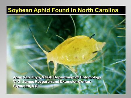Soybean Aphid Found In North Carolina John Van Duyn, NCSU Department of Entomology V. G. James Research and Extension Center Plymouth, NC John Van Duyn,