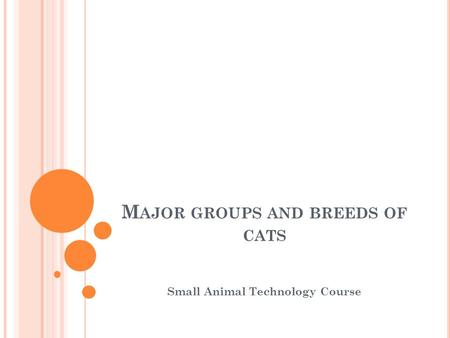 M AJOR GROUPS AND BREEDS OF CATS Small Animal Technology Course.