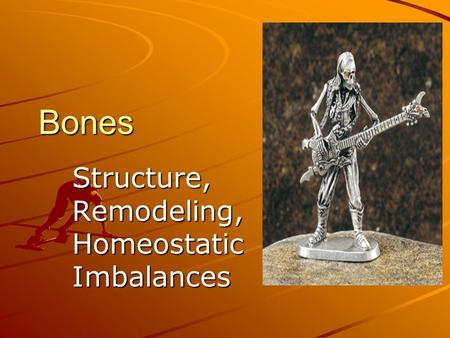 Bones Structure, Remodeling, Homeostatic Imbalances.