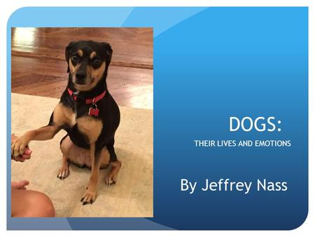 DOGS: THEIR LIVES AND EMOTIONS By Jeffrey Nass. Feeling like having a staring contest?