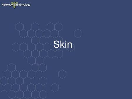 Skin. General outline   skin is the heaviest organ of the human body, it constitutes about 16% of body weight  is composed of epidermis, dermis and.