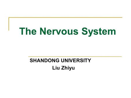 The Nervous System SHANDONG UNIVERSITY Liu Zhiyu.