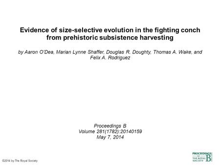 Evidence of size-selective evolution in the fighting conch from prehistoric subsistence harvesting by Aaron O'Dea, Marian Lynne Shaffer, Douglas R. Doughty,