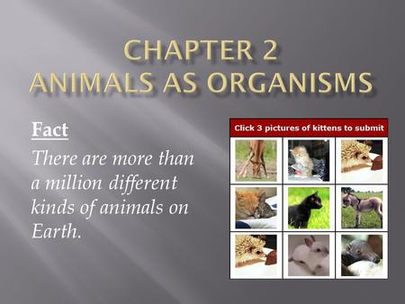 Fact There are more than a million different kinds of animals on Earth.