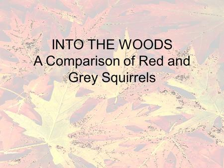 INTO THE WOODS A Comparison of Red and Grey Squirrels.