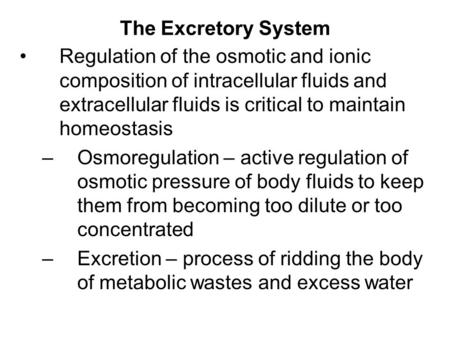 The Excretory System Regulation of the osmotic and ionic composition of intracellular fluids and extracellular fluids is critical to maintain homeostasis.