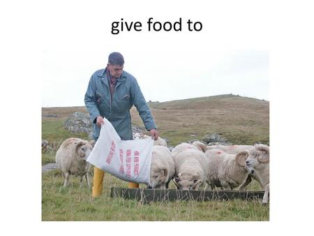 give food to plate or bowl for food doctor for animals.