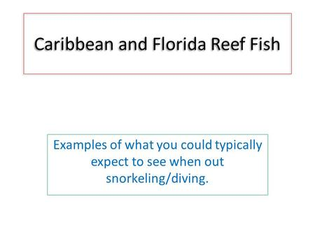 Caribbean and Florida Reef Fish Examples of what you could typically expect to see when out snorkeling/diving.
