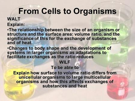From Cells to OrganismsWALTExplain: The relationship between the size of an organism or structure and the surface area: volume ratio, and the significance.