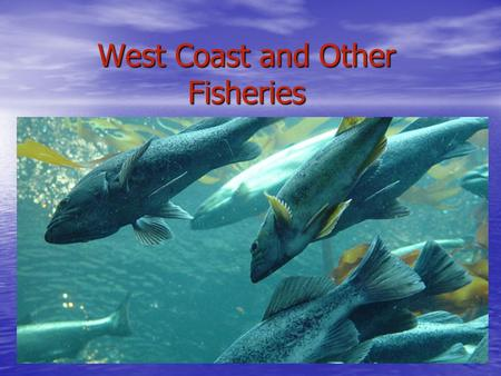 West Coast and Other Fisheries. West Coast Fishery Salmon is most important (400 times larger than Atlantic catch) Salmon is most important (400 times.