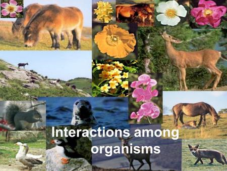 Interactions among organisms. The study of how organisms interact with one another and their environment is called _____.