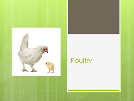 Poultry. What types have you eaten?  List the types of poultry you have eaten: