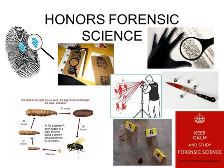 HONORS FORENSIC SCIENCE. Who is Mrs. Kunkle?? Classroom Expectations You will have homework most nights You are expected to come in and start the warm.