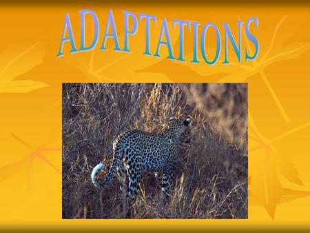 CONTENTS PAGE What are Adaptations? Page 3 Structural Adaptations Page 4 Behavioral Adaptations Page 5 How is food found? Page 6 Defense Page 7 Camouflage.