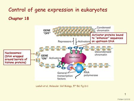 1 Control of gene expression in eukaryotes J G Burr, 11/2/13 Chapter 18 Lodish et al, Molecular Cell Biology, 5 th Ed, fig 11-1 Nucleosomes: (DNA wrapped.