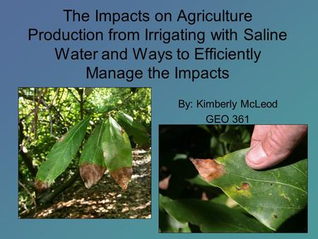 The Impacts on Agriculture Production from Irrigating with Saline Water and Ways to Efficiently Manage the Impacts By: Kimberly McLeod GEO 361.