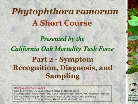 Phytophthora ramorum A Short Course Presented by the California Oak Mortality Task Force Part 2 - Symptom Recognition, Diagnosis, and Sampling Background.