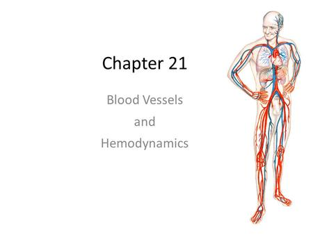 "Chapter 21 Blood Vessels and Hemodynamics. Basic components of the CV organ system The blood vessels of the body should not be thought of as mere ""pipes"""