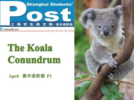 April 高中进阶版 P1. Pre-reading P2P2 What do you know about the koala? How should we humans protect our animal friends? marsupial Australia tailless large.