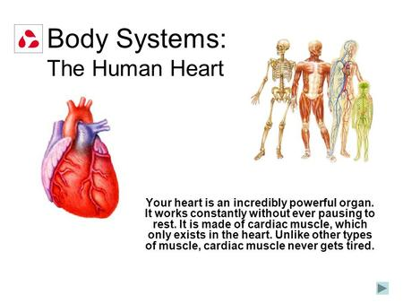 Body Systems: The Human Heart Your heart is an incredibly powerful organ. It works constantly without ever pausing to rest. It is made of cardiac muscle,