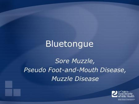 Bluetongue Sore Muzzle, Pseudo Foot-and-Mouth Disease, Muzzle Disease.