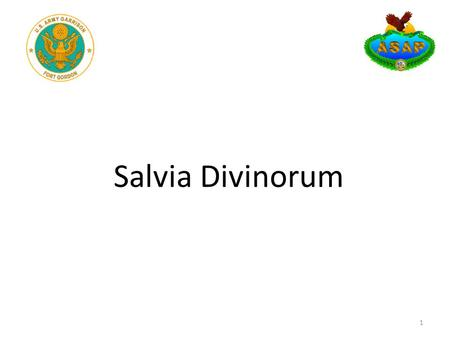 Salvia Divinorum 1. Learning Objectives Terminal Learning Objective: The unit commander will become familiar with Salvia Divinorum and be able to determine.