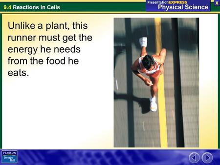 9.4 Reactions in Cells Unlike a plant, this runner must get the energy he needs from the food he eats.