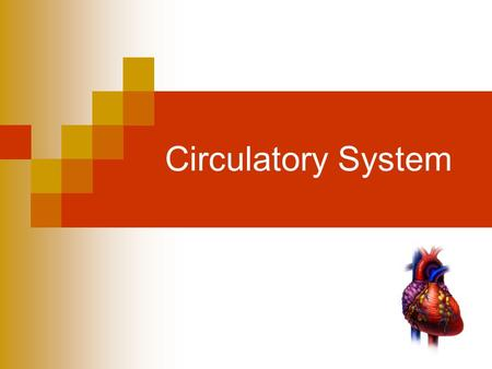 Circulatory System. What Do These Two Systems Have In Common? (Think-Pair-Share) Subway System Circulatory System.