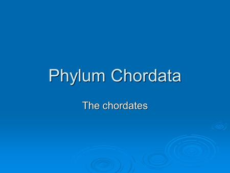 Phylum Chordata The chordates. Five Chordate Hallmarks  Notochord – flexible rodlike structure; extending length of body.